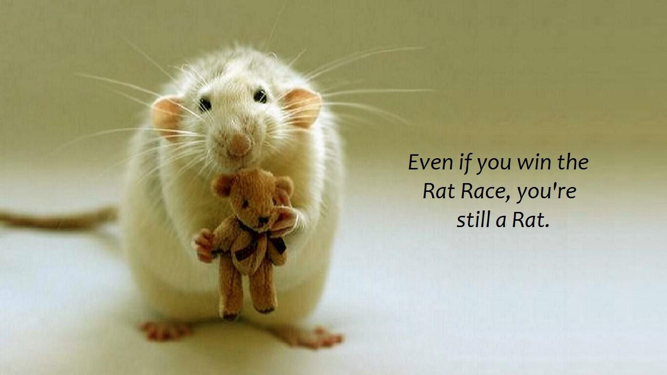 Rat race (la course effrénée de la vie)