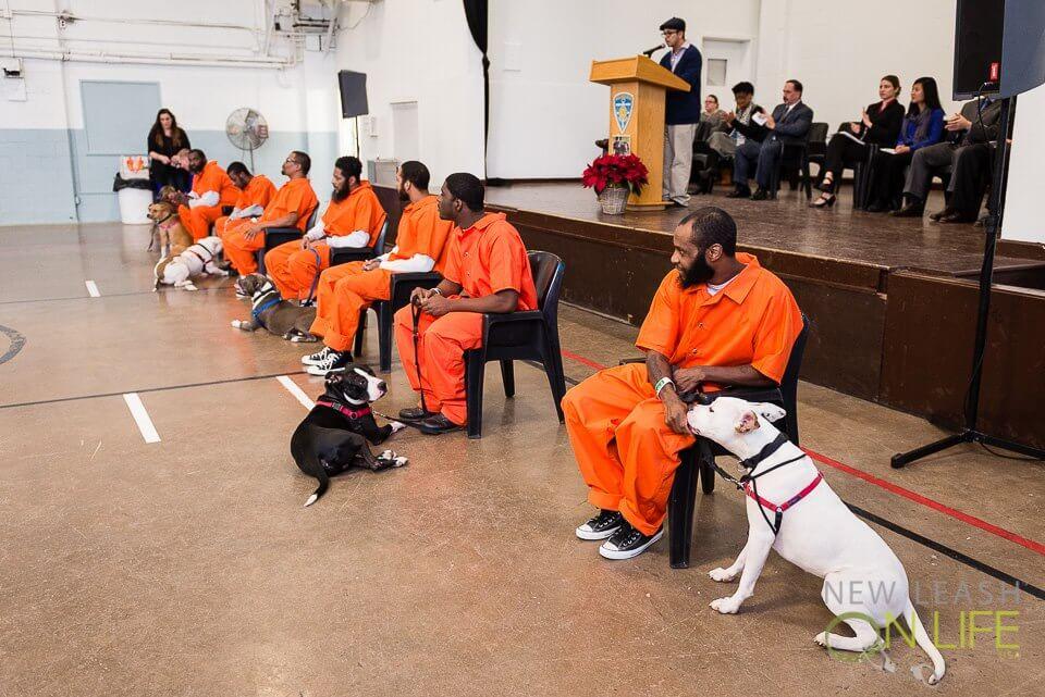 Zoothérapie en prison
